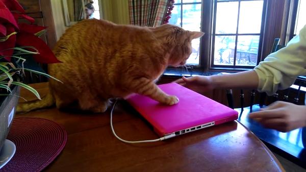 パソコンは絶対に触らせない!飼い主さんVS猫の戦い!猫の座り込み大作戦