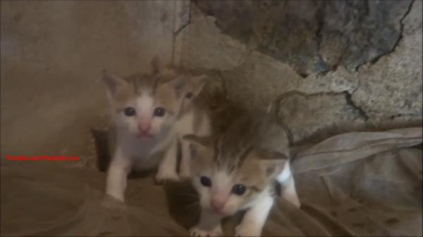 威嚇を続ける仔猫達だが。。果たしてどうなるのやら?