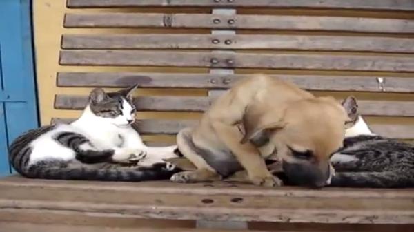 「ねぇねぇ~ここに居てよ!」何が何でもワンちゃんを離さない猫ちゃん♡