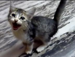子猫が仲間を探して鳴いている姿が必死です!「僕の家族はどこだニャァ~?」
