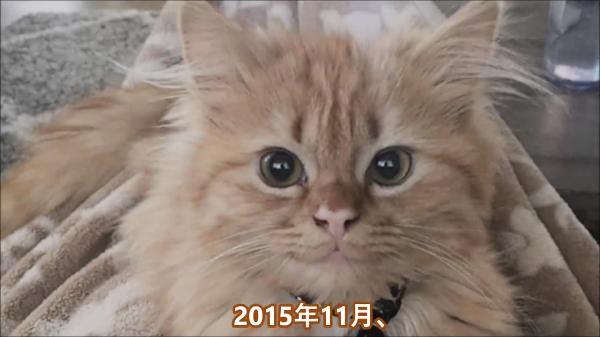 これぞ猫ちゃんスマイル♪シェルターに居たニンマリと笑顔の子猫。家族にも笑顔をもたらす子猫でした