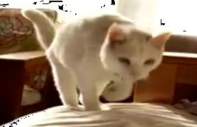 19歳の猫は新しく来た猫が大好き♡フラれてもおかまいなし!猛アタック中です