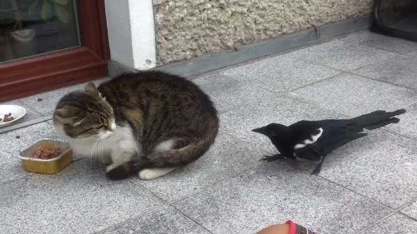 ごはん中に現れた猫ちゃんの敵…だるまさんがころんだ状態勃発!!(笑)