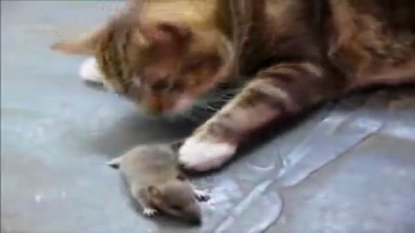 まるでトムとジェリー?!猫とねずみの因縁の対決(笑)