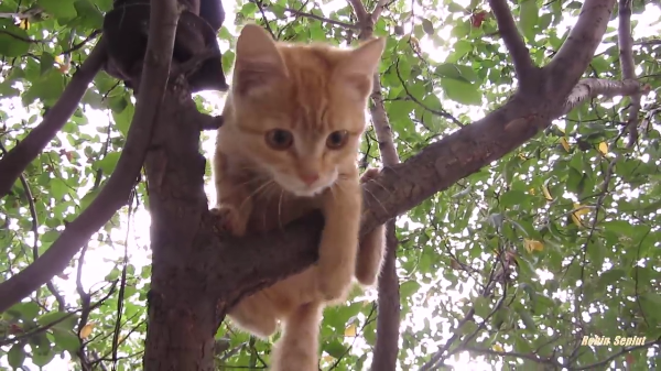 かわいい子猫の木登りの様子♪大人の猫も顔負け?上手に木から下りれちゃうよぉ~