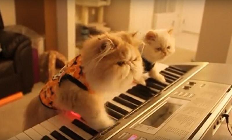 天才にゃんず現わる?!世にも奇妙なハロウィーンミュージックを奏でる2匹のニャンコに驚愕!(笑)