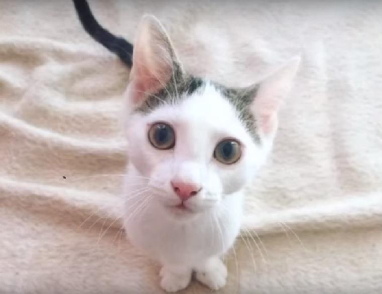 ある日庭に現れた2本足の子猫。保護されてからとても障害猫と思えないほど器用な子猫に感涙…。