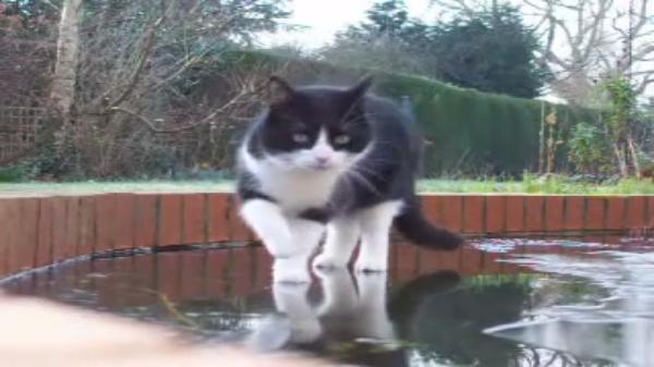 【ヒヤヒヤ】猫ちゃんの乗ってる池の氷が…薄くない!?猫「ふーん?」