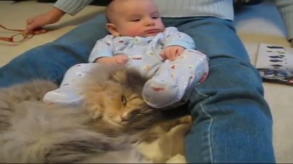 「蹴られたってくっついていたいのにゃ」赤ちゃんにゲシゲシされても飼い主さんの足の間から離れない!