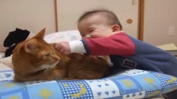 赤ちゃん「シッポうまうま♪」猫「やめて…え?くれるの…??」まさかのおすそ分けw