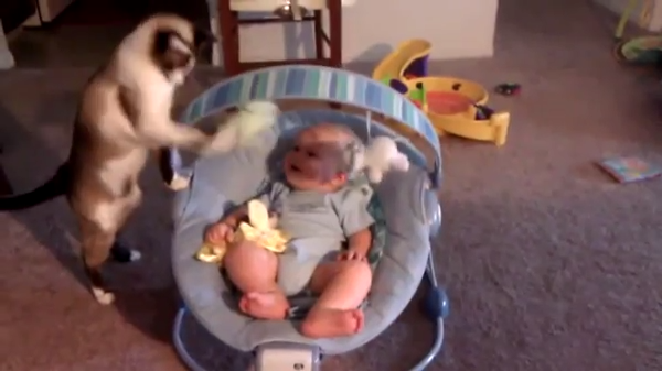 おもちゃを使って赤ちゃんをあやす猫「疲れたにゃ……」