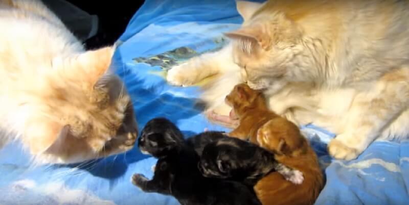 子猫が気になる父猫さん。ちょいちょい触り出す様子をじっと見つめていた母猫さんが驚きの行動に出た!
