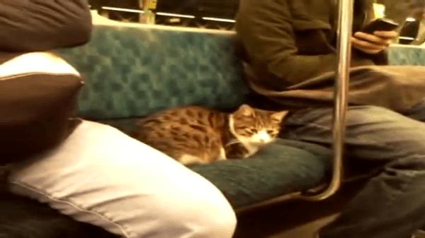ひょっとしたら神様!?年越し間際に電車に乗って移動していた猫ちゃんの向かった先は…?