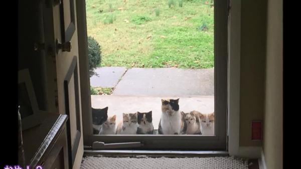 お腹を空かせた野良猫ちゃんの為に庭にごはんを置いてあげた結果…www