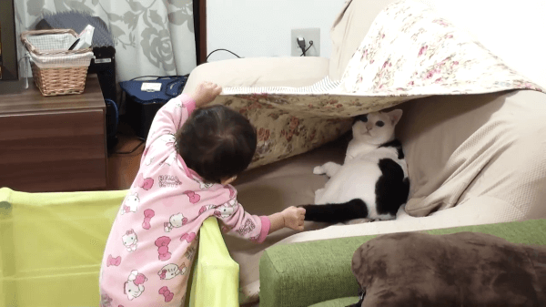 覚えたばかりの「いないいないばあ」で猫ちゃんと一緒に遊ぶ1歳の娘ちゃん♪猫ちゃんもしっぽでお返事してくれます♪