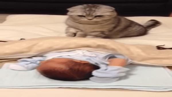 お布団で熟睡中の赤ちゃんにまったく気付かなかった猫ちゃんが赤ちゃんに気づいた時の反応がおもしろ可愛いww