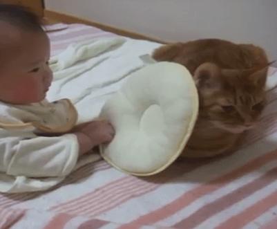 ベビーシッターな猫ちゃん!?赤ちゃんの強引なプレゼントも嫌がる事なく見守る素敵な猫ちゃん♪