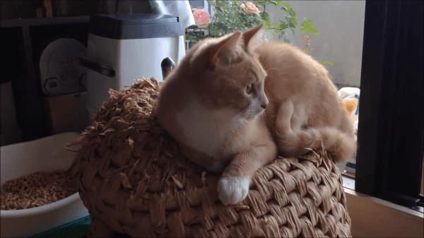 飼い主さんの手作り猫ちぐらが大のお気に入りの2匹の猫ちゃん♪でもちょっと使い方が違いましたww