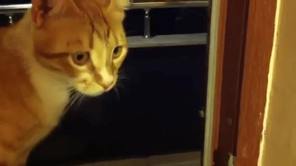 「くしゃいにゃ〜」カメムシにちょっかいを出していたら反撃された猫ちゃんww全力の反応に笑っちゃいますww