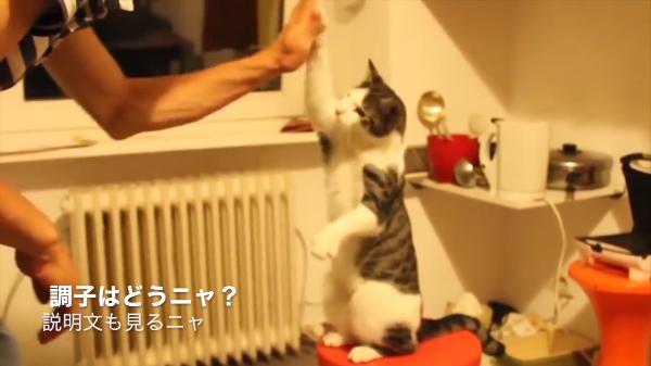 「yeah〜☆」中に人間入ってますか!?見事にハイタッチする可愛い猫ちゃん達ww