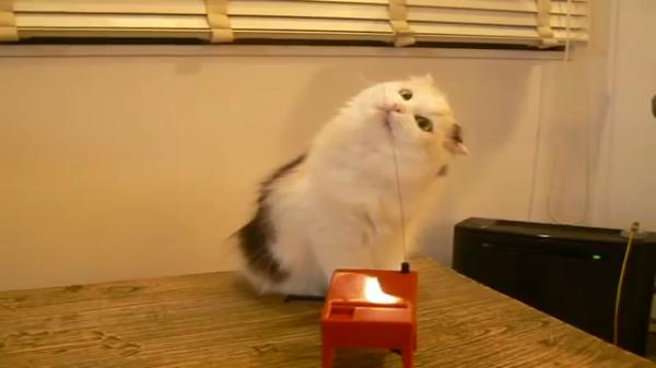 テレビでも話題になった!!猫ちゃんのテルミン演奏会とそれをちゃっかり鑑賞するお客さんの猫ちゃんw