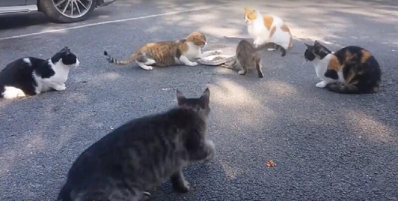 さすが母猫は強し!地域猫として暮らす猫親子、子猫のごはんを必死で守る母猫がたくましいww