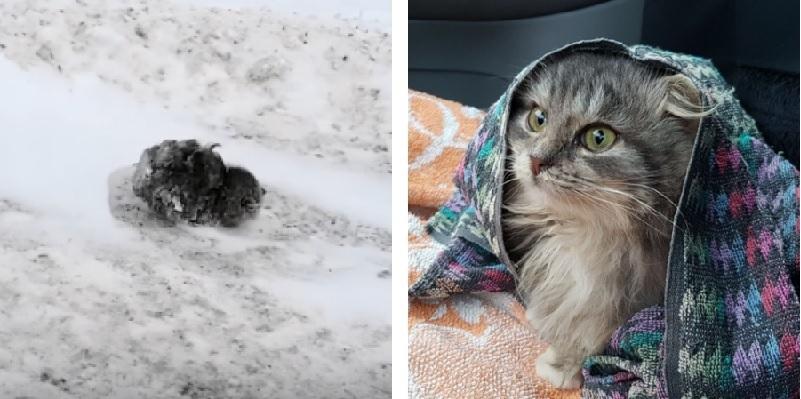 極寒の道路脇で見つかった子猫。体中が雪に覆われ凍死しかけた子猫に差し伸べられた愛の手で救われた感動の実話!