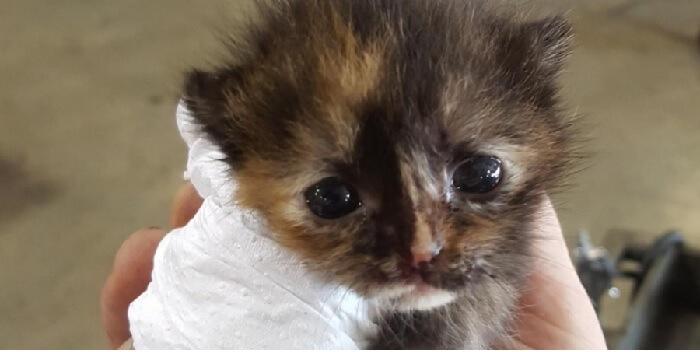 修理中の車の前輪から転がり落ちた生まれたばかりの子猫。猫好きの男性との運命の出会いに感動♡