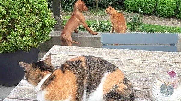 「私の親友に何すんねん!」よそのネコに親友のワンコが叩かれたのを見て仕返しに駆け付けた頼れるネコさんに感動!