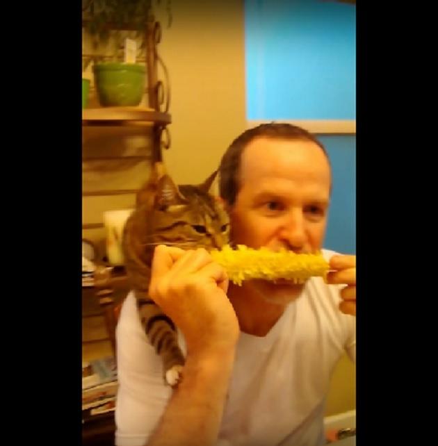 「ウマいにゃ!」パパさんの肩に乗っていっしょに大好きなトウモロコシを食べるにゃんこが可愛すぎるww