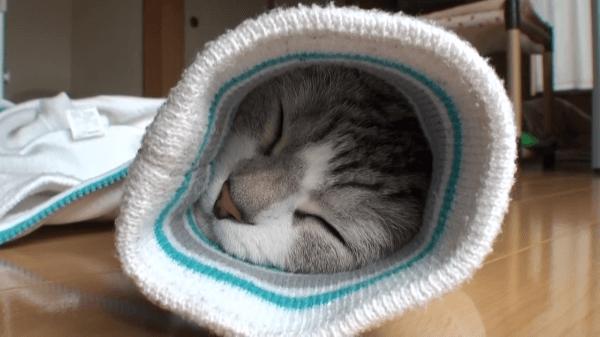 隠れるのが大好き〜♡飼い主さんの上着の袖にもぐりこんで寝ちゃった猫ちゃん♪