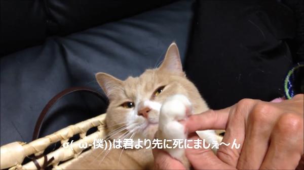 愛猫とゆびきりげんまん〜♪酔っ払いの飼い主さんが猫ちゃんと交わした約束とは!?
