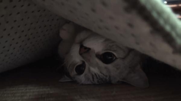 もそもそと動く絨毯の正体は猫ちゃん!絨毯の下に潜り込んで楽しそうに遊ぶ2匹の猫ちゃんです♪