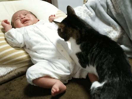 赤ちゃんに足置きにされる猫ちゃん(笑)赤ちゃんがずり落ちて来て泣き出してしまったらあやしてあげる過保護な猫ちゃんですw