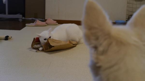 紙袋の上に乗っているだけなのに隠れていますよオーラを出す猫ちゃんが笑えるwww