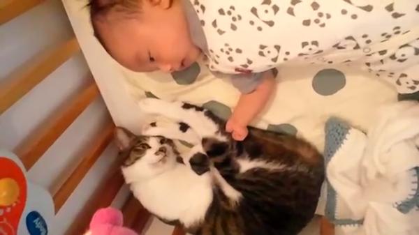 ベビーベッドで赤ちゃんと一緒に寝転がる猫ちゃん♪猫ちゃんひたすら赤ちゃんをガン見していましたww