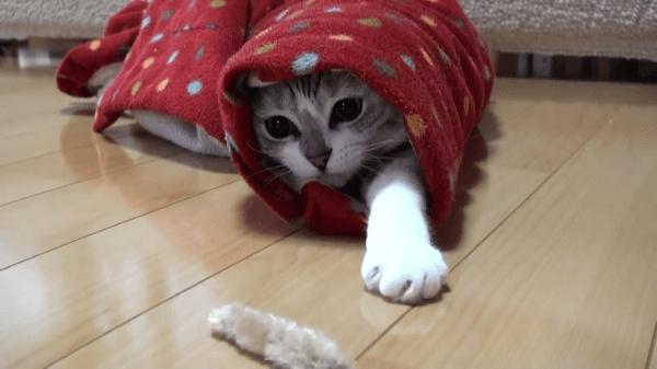 頭隠して尻隠さず!!可愛いお尻がこんにちは(笑)半天のお袖に入っちゃった猫ちゃんが赤ずきんちゃんみたいで可愛すぎた♪♪