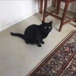 愛猫の黒猫が散歩から帰宅せず、必死で探した飼い主さん。見つかった黒猫は病気になっていましたが…その原因に笑うしかないww