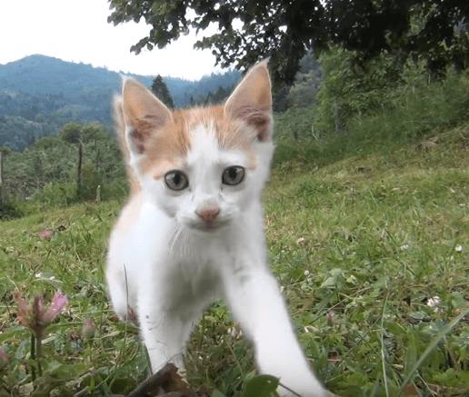 トルコの男性が顔見知りの猫の姉妹の家族にご飯をごちそうして過ごしたひととき・・・その後引き取り手を探しています