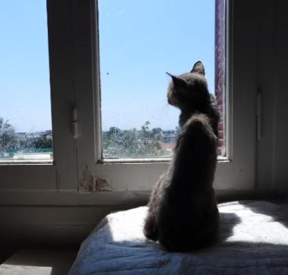 重度の感染症を患っていた猫が保護施設で見つけた自分の居場所。順調な回復をみせていた猫が望んでいたこと・・・