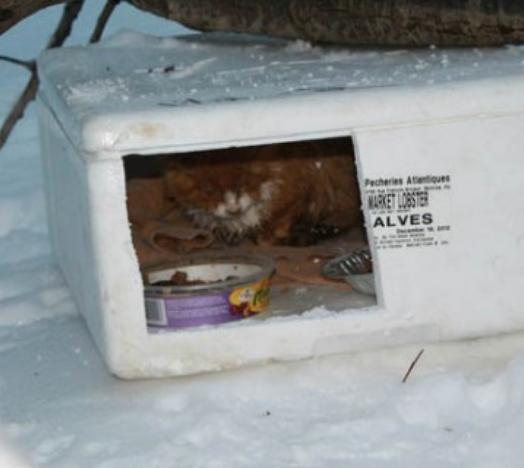雪の中、車で帰宅途中のお父さんの目に一瞬映った白い箱。気になって箱の中身を確かめると2匹の猫が凍えていた・・・