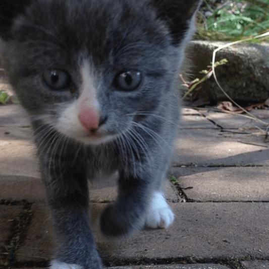 裏庭で大きな声で鳴いていた子猫が松の茂みの中から私に向かって真っすぐに歩いて来た。『お腹空いたぁ~』と鳴きながら・・・