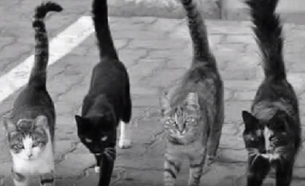 こちらをカッとにらみつけ怖い顔で近づいてくる4匹の野良猫たち。身構えた瞬間、思いもかけない行動にあ然…