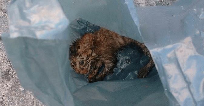 道端にビニール袋に入れられゴミのように捨てられ衰弱していた子猫。数時間後にはなんと兄弟がいっぱい出来た♡