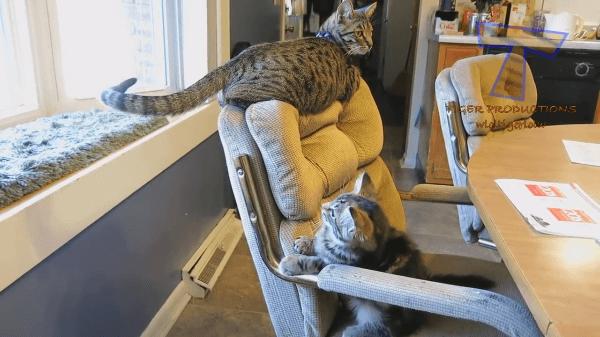 忍者みたいな猫!?アクロバティックな猫たちの技がすごすぎるッ!!!