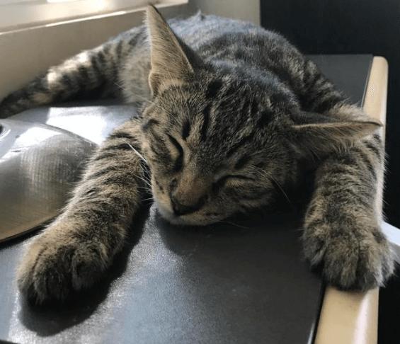 仕事を終えて自宅に帰ったら知らない猫が私の椅子で待っていた・・・どうやら子猫は自分の家を見つけたらしい