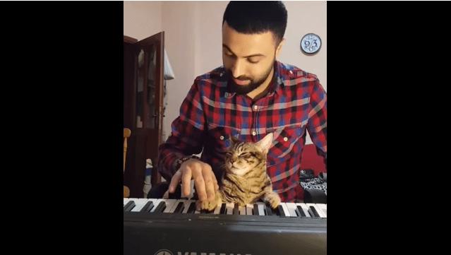 ピアニストな猫なんているの!?仲良しの飼い主さんにされたい放題!それでも幸せそうにピアノを弾くにゃんこさん♪