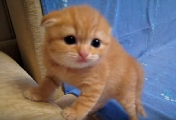 超カワイイ♡ママ猫さんに置いてきぼりの子猫ちゃんいっちょまえに威嚇するけど…効果ある?(笑)