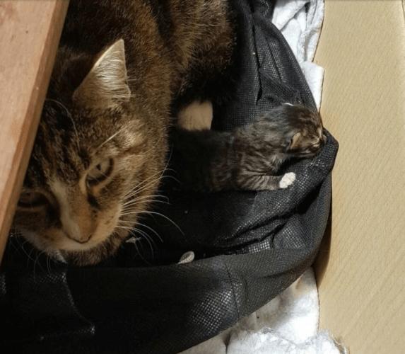 アパートの敷地に現れる猫にご飯をあげていた夫婦と女性。ある日、猫は女性のバルコニーに子猫を連れてきた・・・