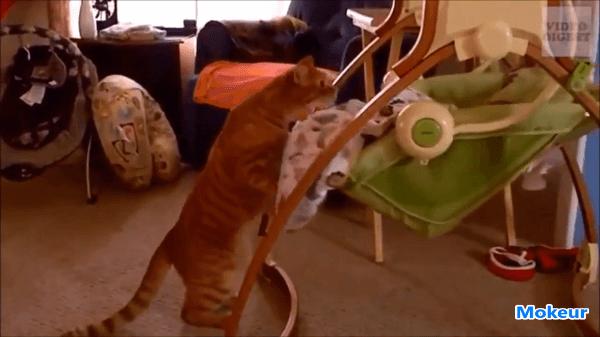 猫のベビーシッター!?本当に大丈夫?子守りがあまり上手で思わず驚きの声がッ!